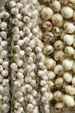 Bulbs of garlic and onions hanging outside a store in Cuba. Some bulbs of garlic and onions hanging outside a store in Cuba royalty free stock photos