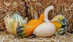 Bumpy gourd. Some bumpy gourd on hay bunch at the market place stock photography
