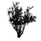 Some bush black silhouettes Royalty Free Stock Image