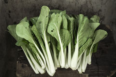 Some cabbage. Close-up of some fresh cabbage royalty free stock photos