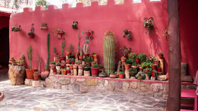 Some cactus in terracotta pots. In an old small town in argentina Royalty Free Stock Photography