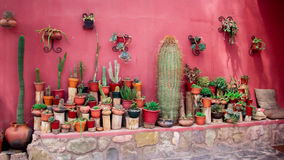 Some cactus in terracotta pots. In an old small town in argentina Stock Photos
