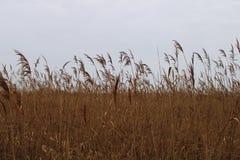 Some canes on a filed. Near Gardony, Hungary stock photography
