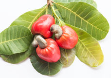Some cashews with leafs. On white background stock photography
