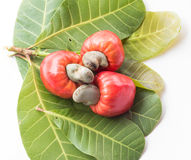 Some cashews with leafs Stock Photo