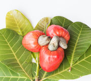 Some cashews with leafs. On white background royalty free stock photos