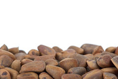 Some cedar nuts Stock Photography