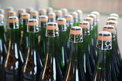 Some champagne bottles in a Catalan cava factory. Royalty Free Stock Photo