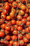 Some Cherry tomato at street market. Image of some Cherry tomato at street market Stock Images