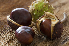 Some chestnut on bark. Some horse chestnuts on barks background Stock Photos