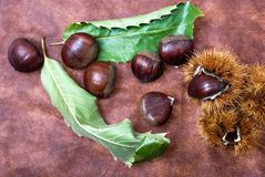 Some Chestnuts on  Brown Cloth Background with Leaves and raw Sh Royalty Free Stock Photo