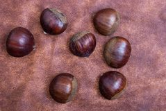 Some Chestnuts on Brown Cloth Background with Leaves and raw Sh. Ell of Thorns Stock Photos