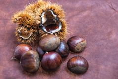 Some Chestnuts on Brown Cloth Background with Leaves and raw Sh. Ell of Thorns Stock Image