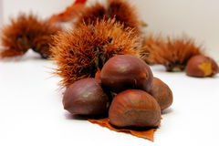 Some chestnuts Stock Photos
