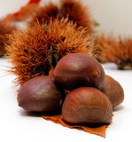 Some chestnuts. Some cooked roasted brown chestnuts Stock Photography