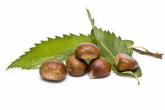 Some chestnuts and some leaves. Stock Photo