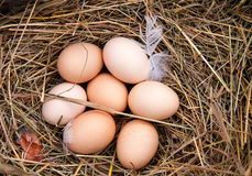 Some chicken eggs lying in the hay.  Royalty Free Stock Photos