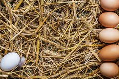 Some chicken eggs lying in the hay. Copy space Stock Photo