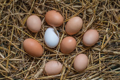 Some chicken eggs lying in the hay. Top view Stock Images