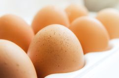 Some chicken eggs. On a light background royalty free stock photography