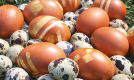 Some chicken and quail eggs for the Easter close-up. Background, different size of eggs, natural color and some lines. Day light, sunny day royalty free stock photos