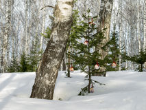 Some christmas balls on the fir-tree in the forest. Stock Photography