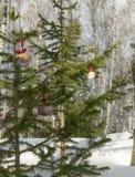 Some christmas balls on the fir-tree. One sharp ball beyond. Stock Images
