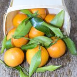 Some clementimes. Some clementines lying in a brown basket on the table. They still carry green leaves royalty free stock photo