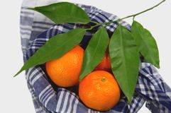 Some clementines wrapped with a typical Valencian handkerchief accompanied by an orange branch with green leaves. Three tangerines wrapped with a typical Royalty Free Stock Photo