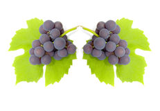 Some clusters of a grapes Royalty Free Stock Photo