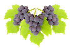 Some clusters of a grapes. On green to a leaf. The isolated image on a white background Stock Photo