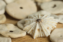 Some cockleshells on a wooden surface Stock Photos