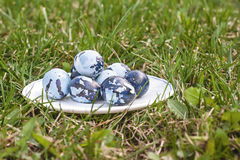 Some colored Easter eggs on the plate, on the green lawn. Quail eggs colored like camouflage on the white plate. Cloudy day, close up, side view Royalty Free Stock Images