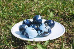 Some colored Easter eggs on the white plate, on the green lawn. Some colored Easter eggs on the plate, on the green lawn. Quail eggs colored like camouflage on royalty free stock photography
