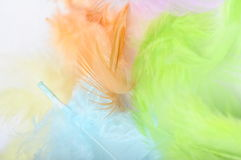 Some colored feathers Stock Image