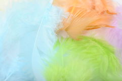 Some colored feathers Royalty Free Stock Photography