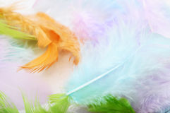 Some colored feathers Stock Images