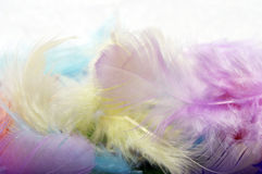 Some colored feathers Stock Photo