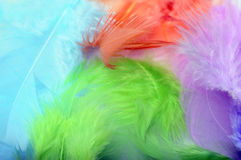 Some colored feathers Stock Photography