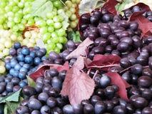 Some colored grape Stock Image