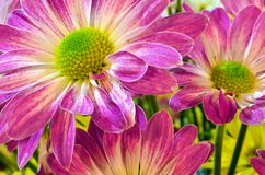 Some colorful flowers in the garden. Several colorful flowers in the garden royalty free stock photos