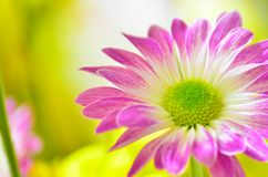 Some colorful flowers in the garden. Several colorful flowers in the garden royalty free stock photo