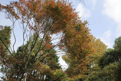 Some colorful leaves in Daihieihieizan. Kyoto Royalty Free Stock Image