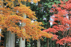 Some colorful leaves in Daihieihieizan. Kyoto Royalty Free Stock Photo