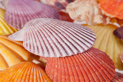 Some colorful sea shells macro. Some beautiful colorful sea shells macro stock photo