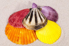 Some colorful sea shells of mollusk on sand. Close up stock images