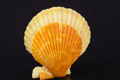 Some colorful seashells of mollusk isolated on black background. Close up Royalty Free Stock Photos