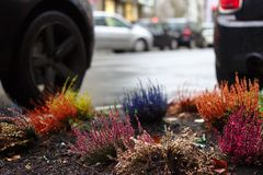 Some colors in the city with urban gardening royalty free stock photo