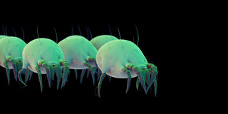 Some common dust mites Royalty Free Stock Images