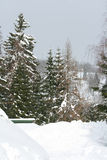 Some conifers under the snow in mountains. Some conifers under the snow in winter mountains royalty free stock photography